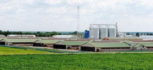 Молочнотоварный комплекса «Александрия»